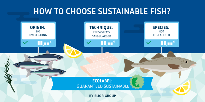How to choose sustainable fish?